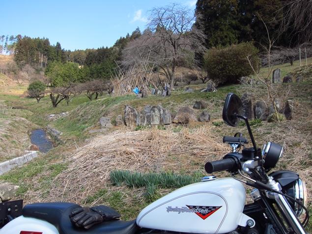 10_梅団地.JPG