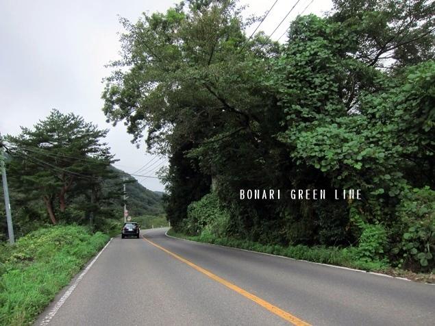 35_BONARI_GREEN_LINE (2).JPG