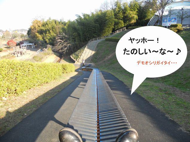20111127_084754-1.JPG